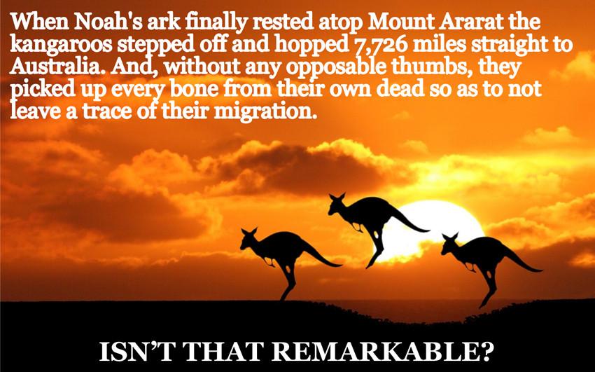 [Image: kangaroos.jpg]
